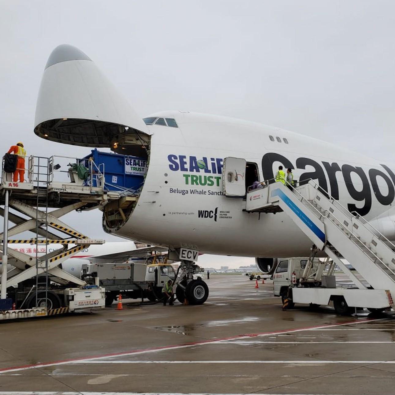 Illustration of: Beluga decals for Cargolux, SEA LIFE Trust and WDC